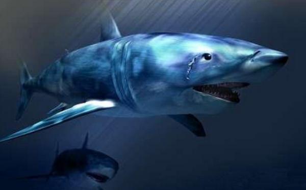 德州扑克从鱼到鲨鱼的进化